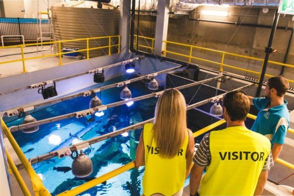Experience a VIP Tour of Cairns Aquarium