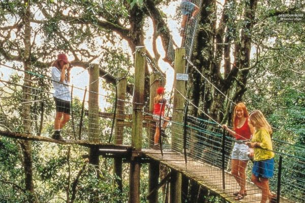 O Reilly s Rainforest and Mt. Tamborine Tour from Brisbane